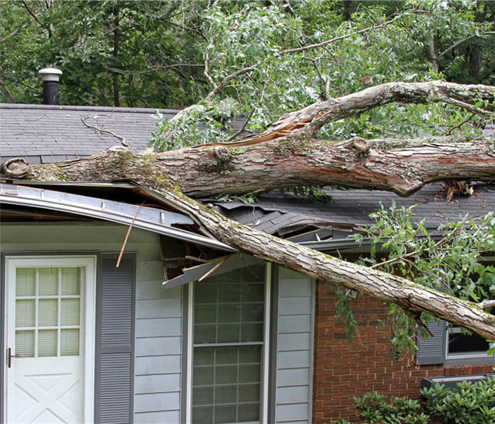 Tree fallen on a house
