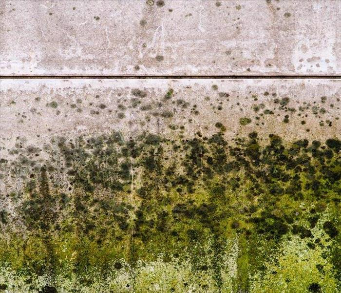 Mold Remediation Mold Keeps Coming Back: Why Didn't Bleach Work?